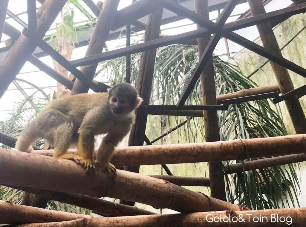Dar de comer a monos ardilla en Faunia