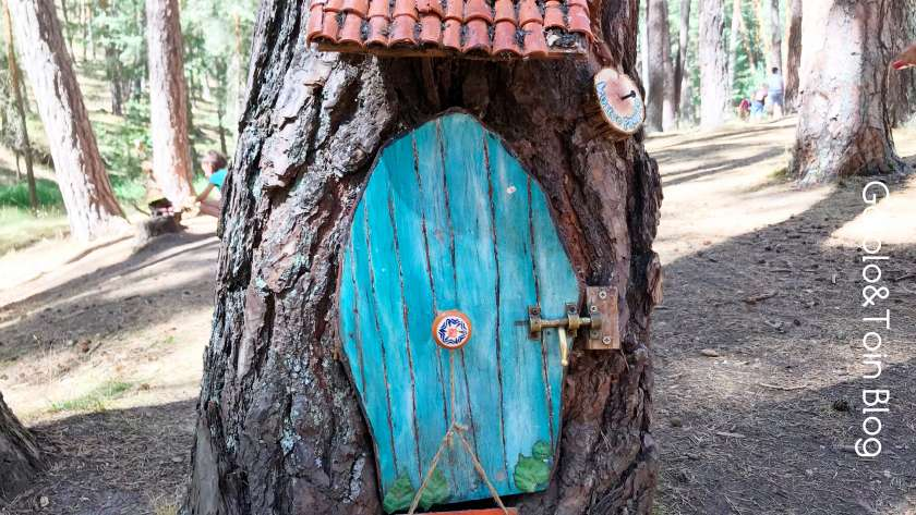 Descubrimos un Bosque Mágico en Soria