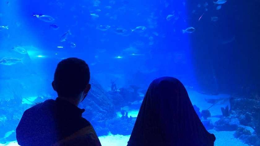 Atlantis Aquarium, descubriendo el océano